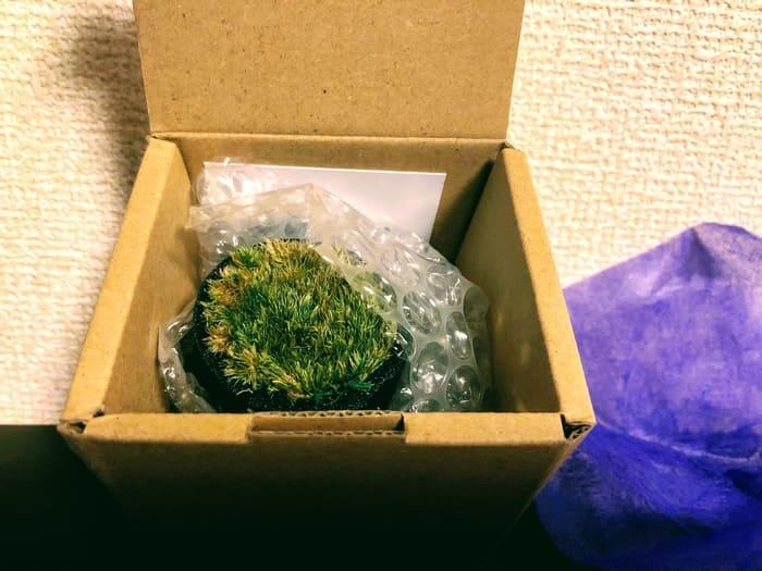 竹炭(TAKESUMI)苔庭レビュー